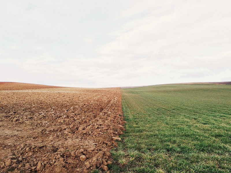 the brown earth field to the left and a green field to the right separated with a clear line