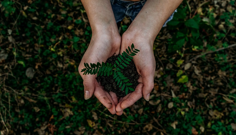 Hands photographed from above holding a plant on the greenery background